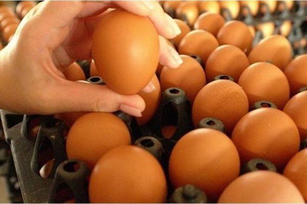 วิธีเก็บไข่ไก่ ให้ทานได้นานและปลอดภัยเคล็ดลับสำหรับคุณแม่บ้านต้องรู้