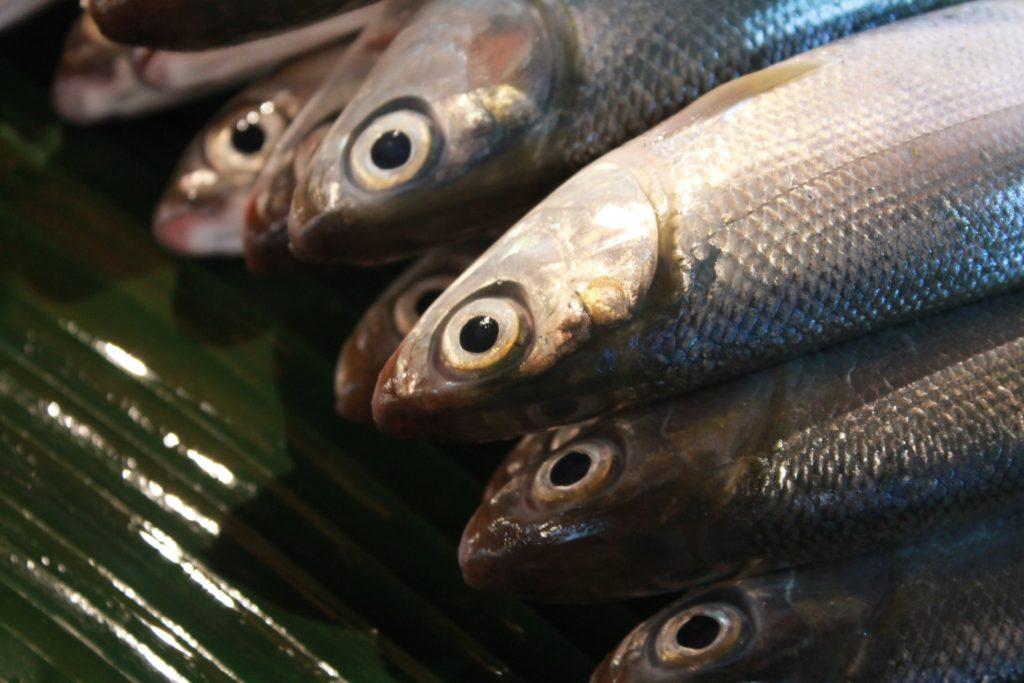 คู่มือการทำปลา-แล่ตามใจ