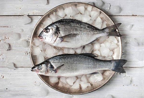 คู่มือการทำปลา-ปลาละลายน้ำแข็ง